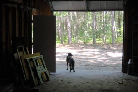 shadow in barn